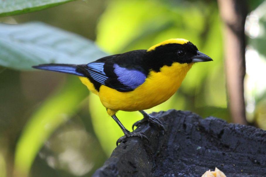 021 Di 16.07.2013 Paz de las Aves & Oilbird - 028